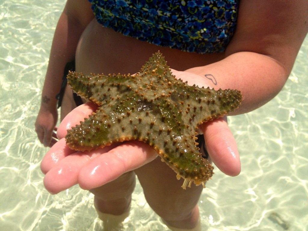 Key West Starfish